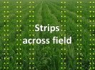 Field Patterns_5
